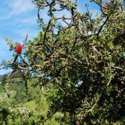 Nilgiris2012BottleBrush